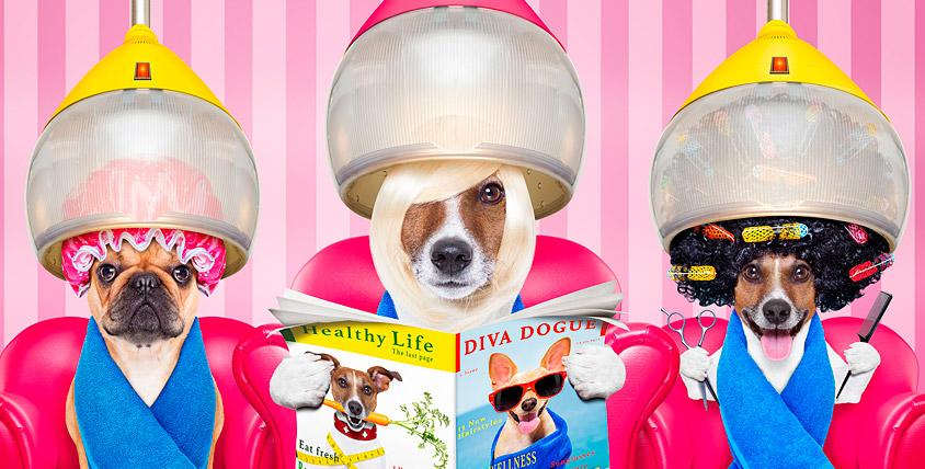 "Сертификат 2000 руб. на услуги зоосалона ""ЛедиГрум"" и 4 кг корма для собак"