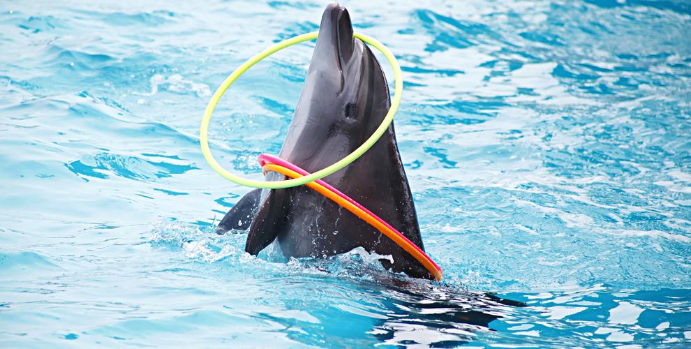 Билеты 4000 руб. шоу дельфинов от GILMON