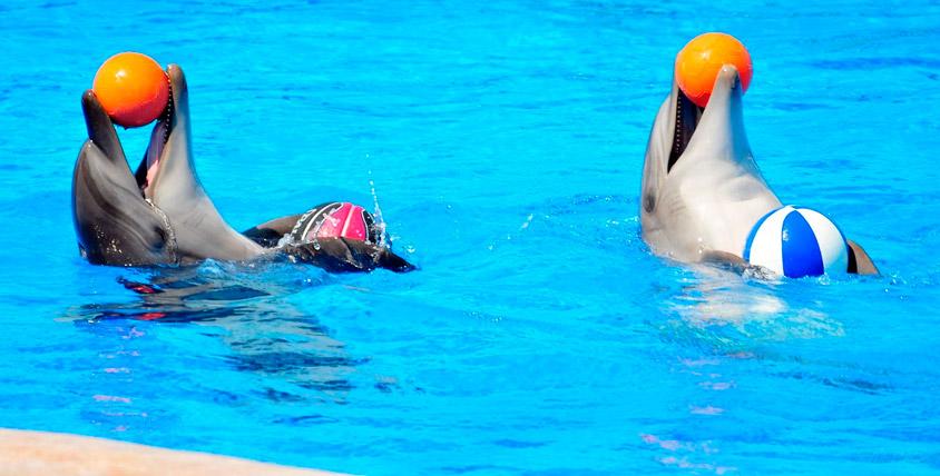 Билеты (на двоих) 4800 руб. на шоу дельфинов от GILMON