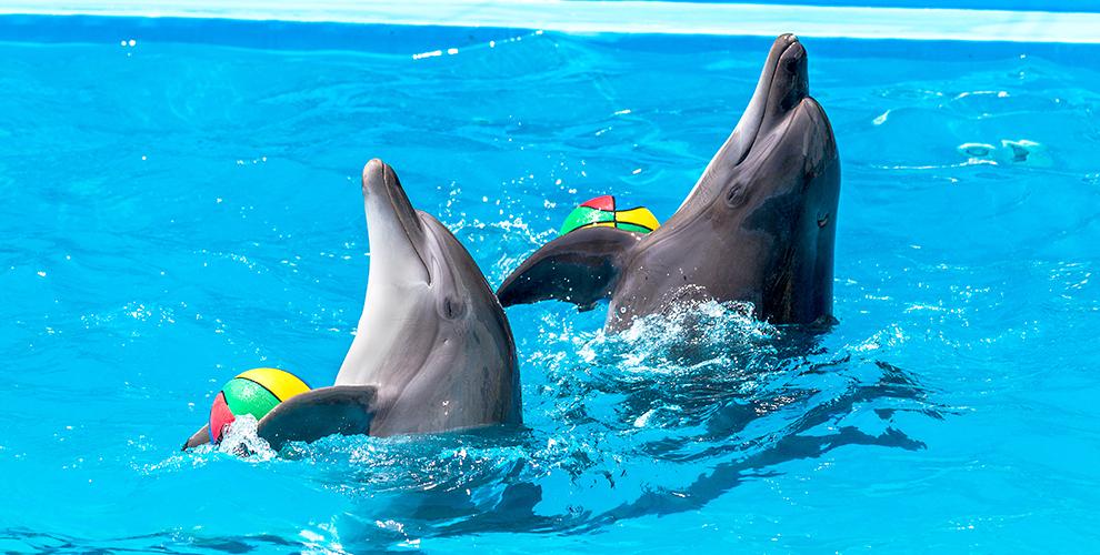 Билеты 8000 руб. на шоу дельфинов от GILMON