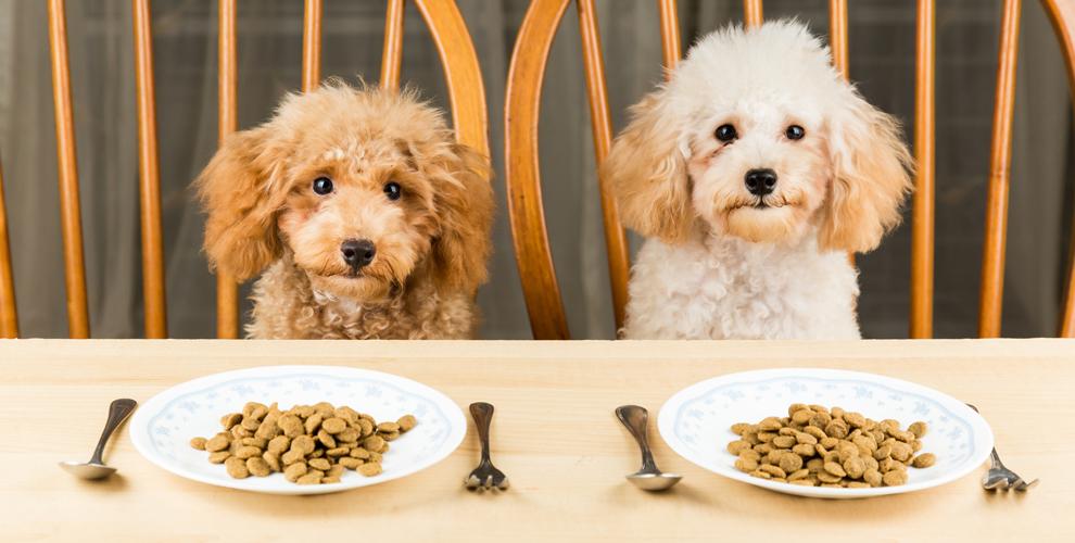 "4 кг корма для собак + сертификат 2000 руб. на услуги зоосалона ""ЛедиГрум"""