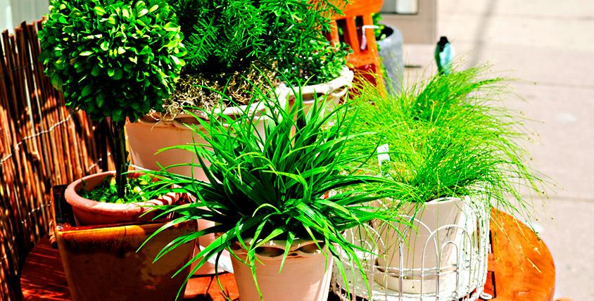 """Корзина с горшечными растениями общей стоимостью 2500 руб. от сети салонов """"Дон Пион"""""""