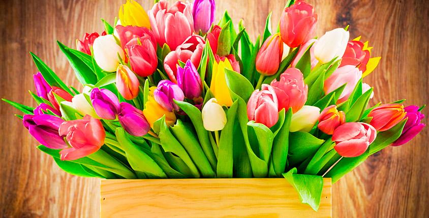 """Букеты из тюльпанов от салона цветов """"Дикая орхидея"""""""