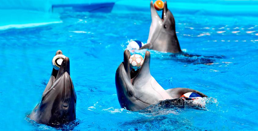 """Билеты в дельфинарий на шоу """"Остров Мадагаскар"""" 8000 руб. от GILMON"""