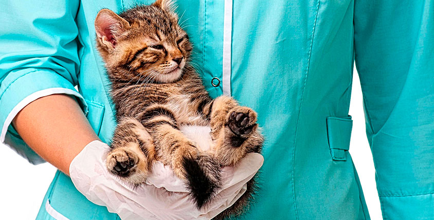 """Комплекс услуг для домашних любимцев в ветеринарном центре """"Новокосино"""""""