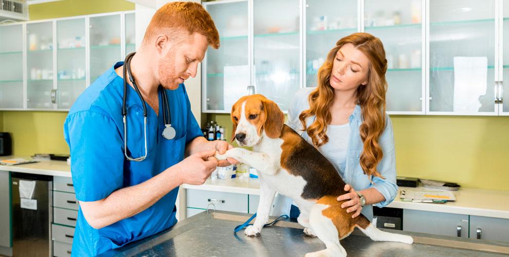 Консультация, стерилизация и УЗ-чистка зубов в ветеринарной клинике «Оберег»