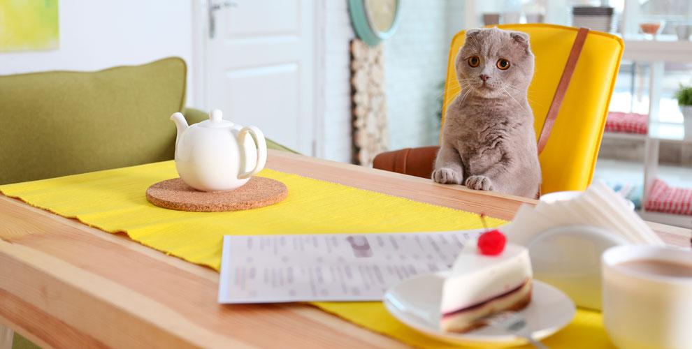 Настольные игры, чай, сладости, общение с котами в тайм-кафе Murzik