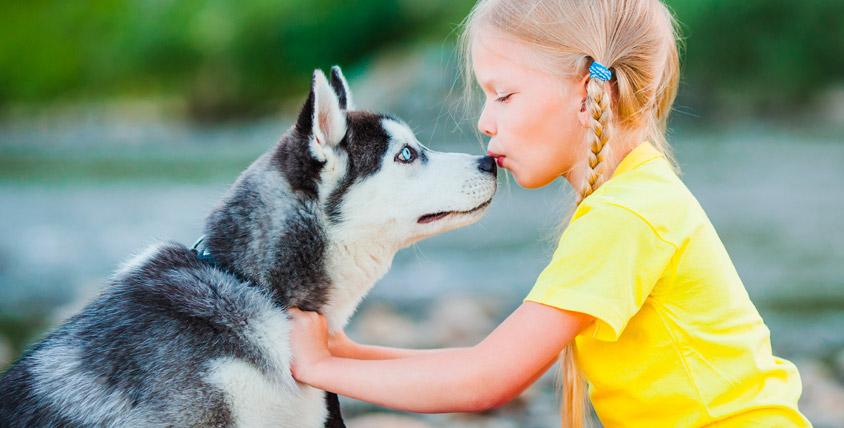 """Экскурсия """"Весна с хаски"""": рассказы, общение с собаками и не только в СК """"Бореалис"""""""