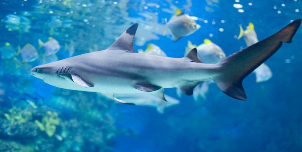 Билеты на выставку морских аквариумов «Кусто» для детей и взрослых