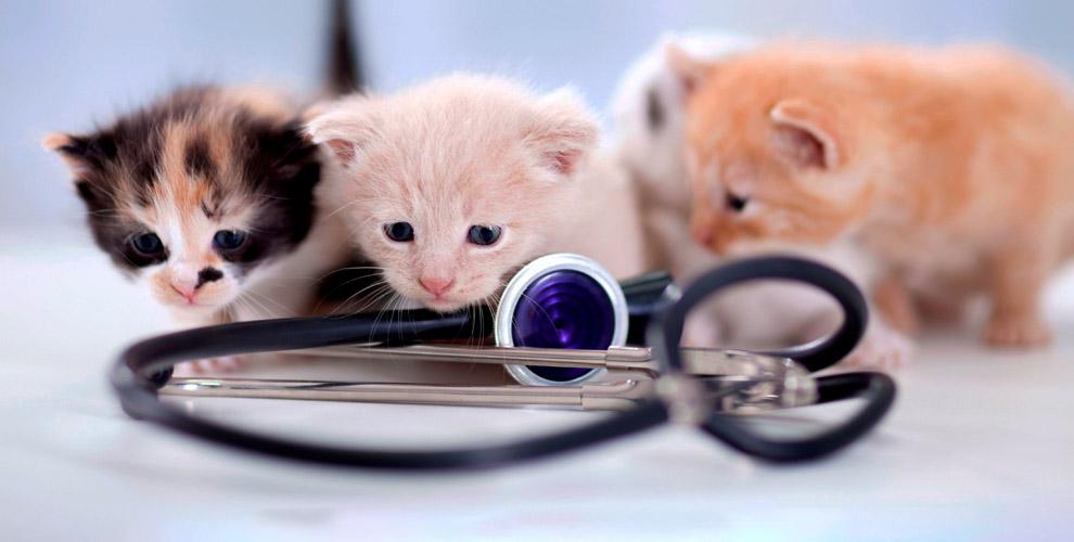 """""""Ветеринарный центр"""": прием врача-ветеринара, УЗИ, обрезка когтей и другое"""
