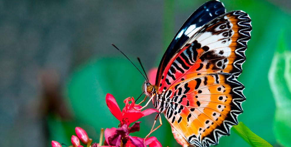 Билеты напосещение выставки бабочек вЗоопарке