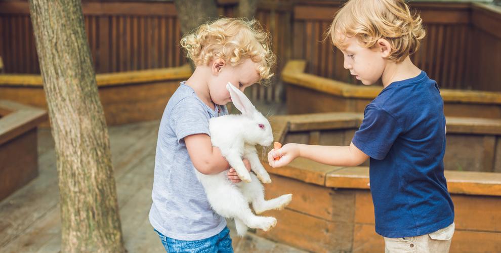 Билеты в контактный зоопарк ОZОРНАЯ КОZА для детей и взрослых