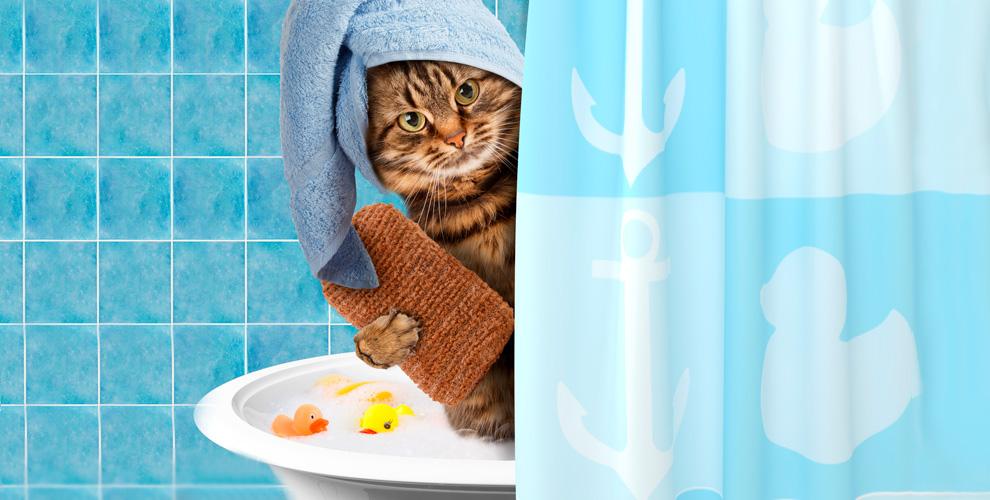 """УЗ-чистка зубов для кошек и собак, стрижка и не только в зоосалоне """"ЛедиГрум"""""""