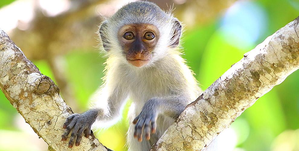 Билеты на выставку обезьян «Лимпопо» для детей и взрослых