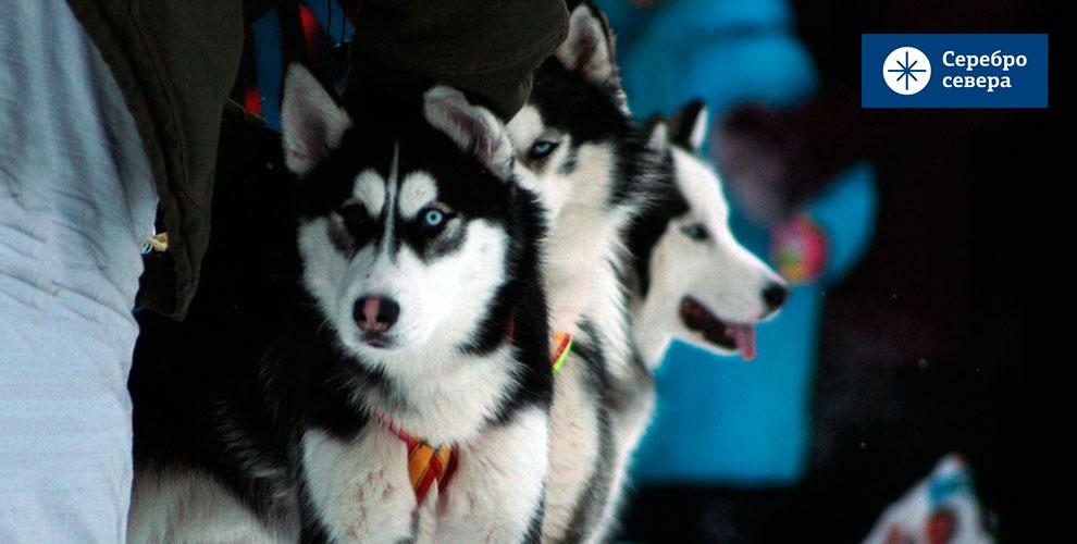 Экскурсионные туры выходного дня в Деревне ездовых собак «Серебро Севера»
