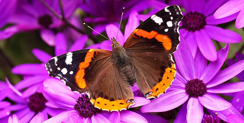 """Билеты в """"Парк живых тропических бабочек"""" для взрослых и детей от 50 руб."""
