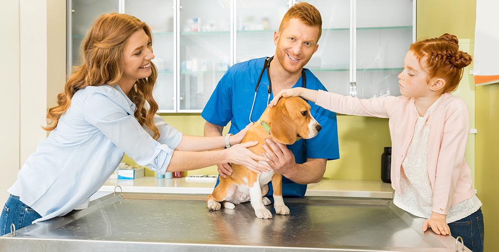 Кастрация истерилизация животных, удаление когтей ответеринарной клиники «Вет-Проф»