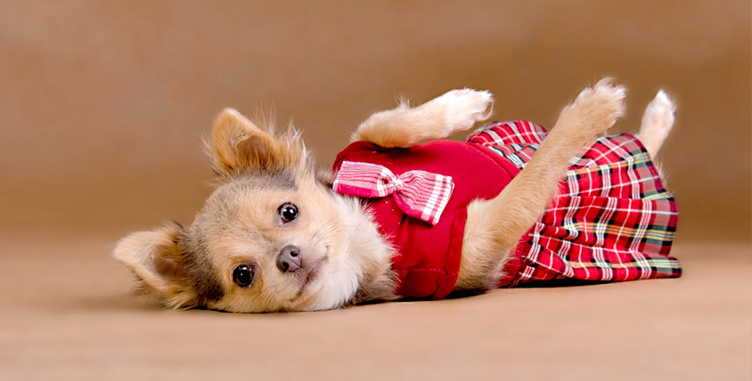 """Первая школа кройки и шитья: """"Пошив верхней одежды"""", """"Пошив одежды для собак"""" и другое"""