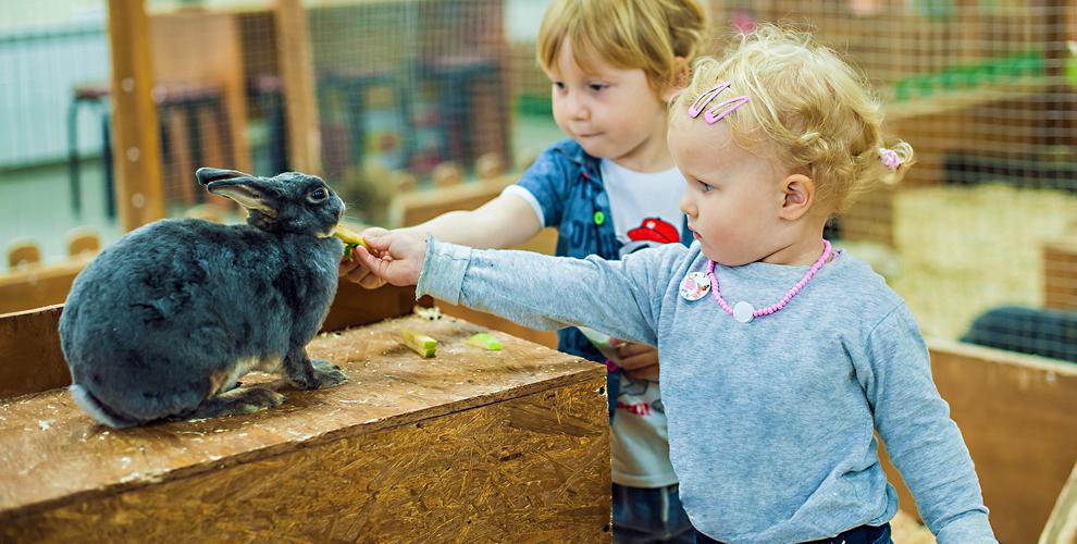 Посещение контактного зоопарка «Упитанный ослик»