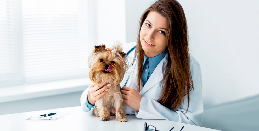Кастрация и стерилизация домашних животных в ветеринарной клинике «Доверие»