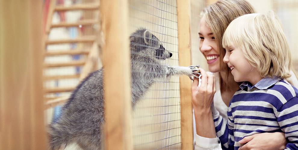 Посещение контактного зоопарка «Зверюшки-не игрушки!»