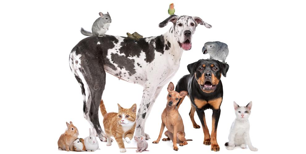 Груминг иразмещение животных взоосалоне «Собачья радость»