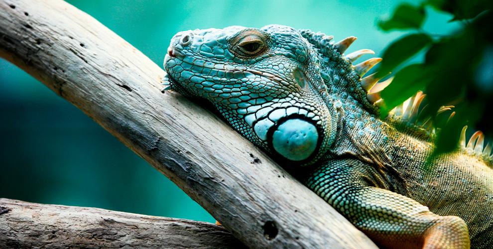 Билеты впарк экзотических животных «Живая планета»