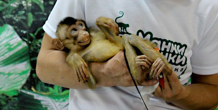 """Выставка обезьян в ТРК """"Горки"""" и знакомство с животными из разных уголков мира"""