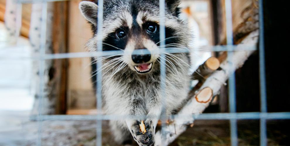 «ОСКОР»: посещение контактного зоопарка и аренда зоны барбекю
