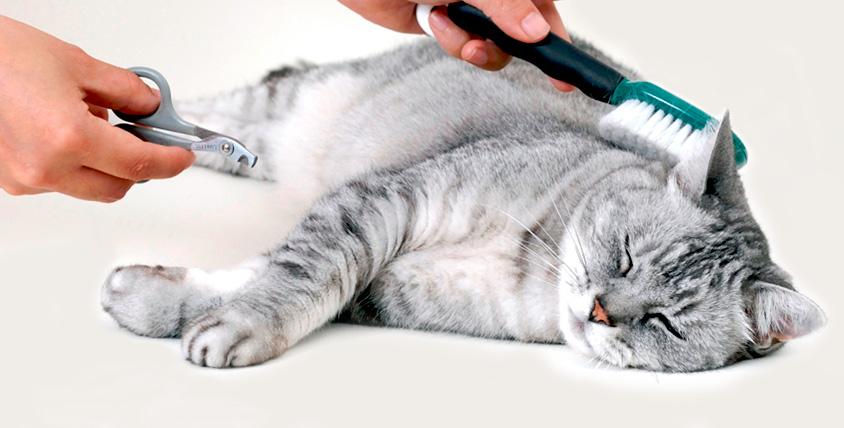 """Подстригание когтей кошек и собак, стрижка и не только в зоосалоне """"ЛедиГрум"""""""