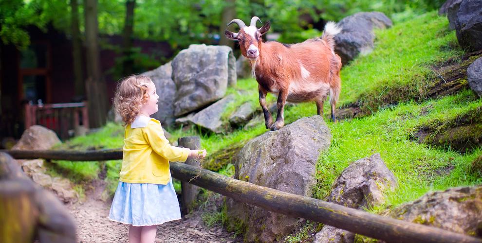Эко-ферма «Семейное подворье»: контактный зоопарк на свежем воздухе, прыжки на батуте