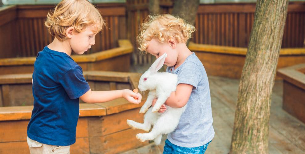 Посещение контактного зоопарка «Простоквашино» длявзрослых идетей