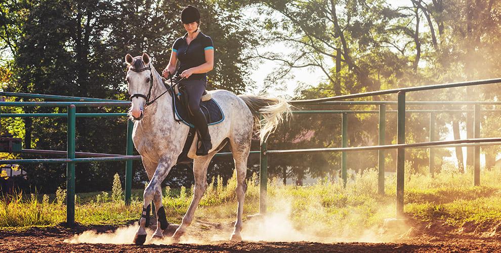 Индивидуальные занятия поверховой езде иаренда лошади вклубе «Солнечный конь»