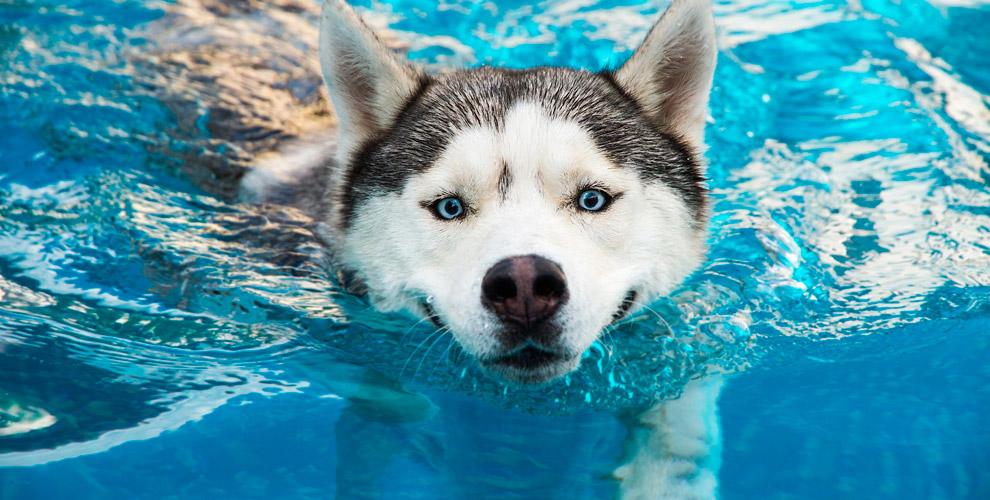 AquaDog: массаж длясобак, УЗ-чистка зубов, посещение бассейна иподстригание когтей