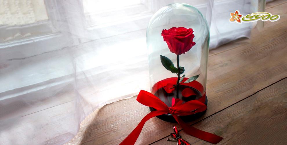 Магазин цветов «Чудо VIP»: стабилизированная роза в колбе и букеты