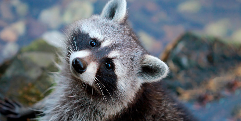 Посещение контактного зоопарка «Трогай, гладь, корми!»