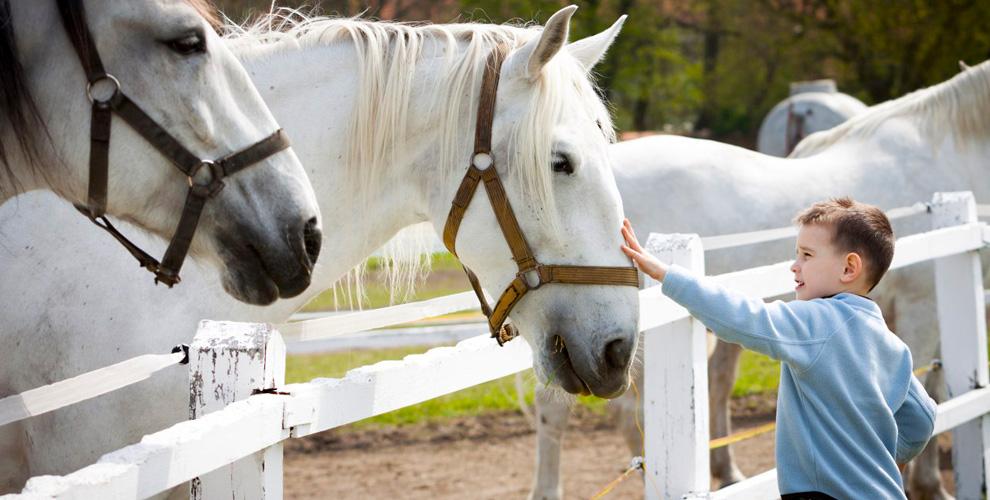 «Конный клуб»: посещение фермы, обучение верховой езде ипроживание вюрте