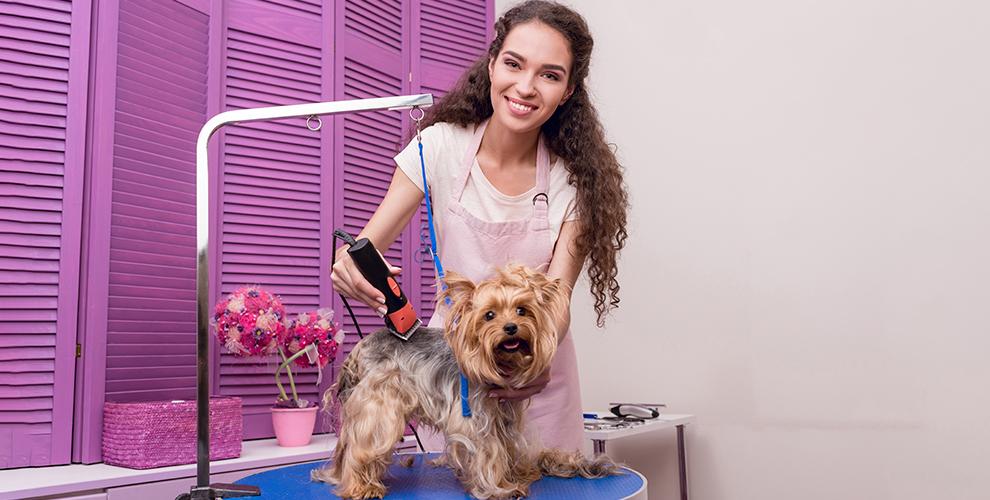 Стрижки, УЗ-чистка зубов, кастрация и стерилизация животных в студии груминга Lucky