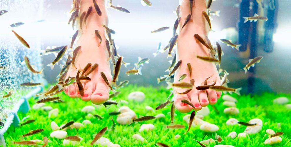 Экзотический SPA-пилинг ног и тела рыбками Гарра Руфа в салоне DoctorFish