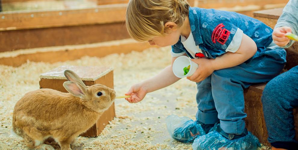 Посещение контактного зоопарка «Простоквашино» для взрослых и детей