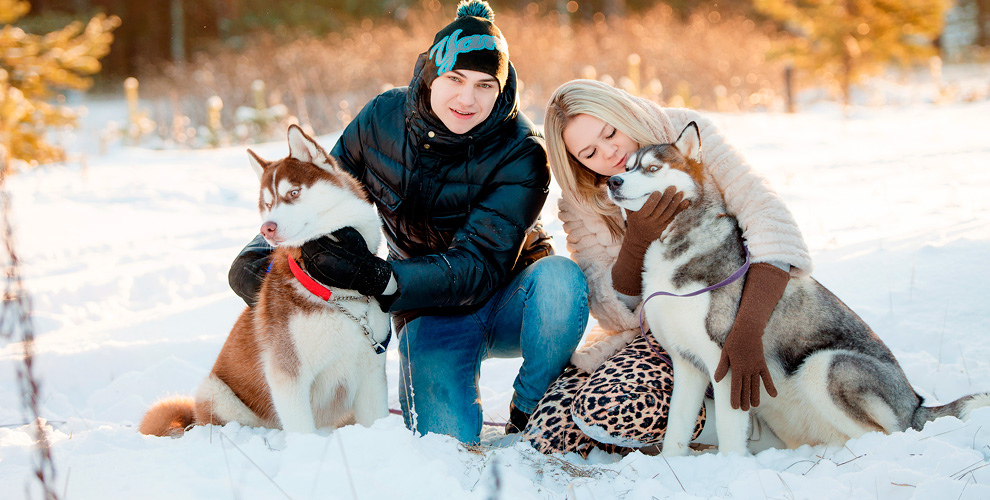 Экскурсия «Зима схаски»: рассказы, общение ссобаками вСК«Бореалис»
