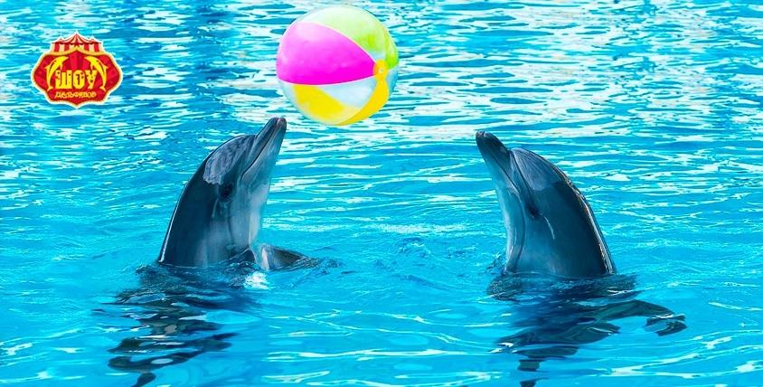 """Два билета по цене одного в аквакомплексе """"Дельфинарий"""""""