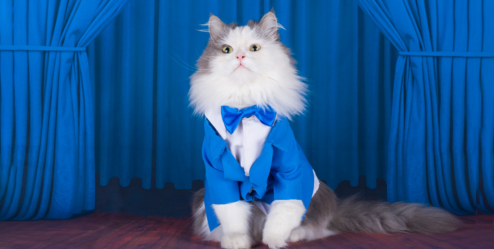 Билеты на международную выставку кошек для детей и взрослых от РПФЦ «Артемида»