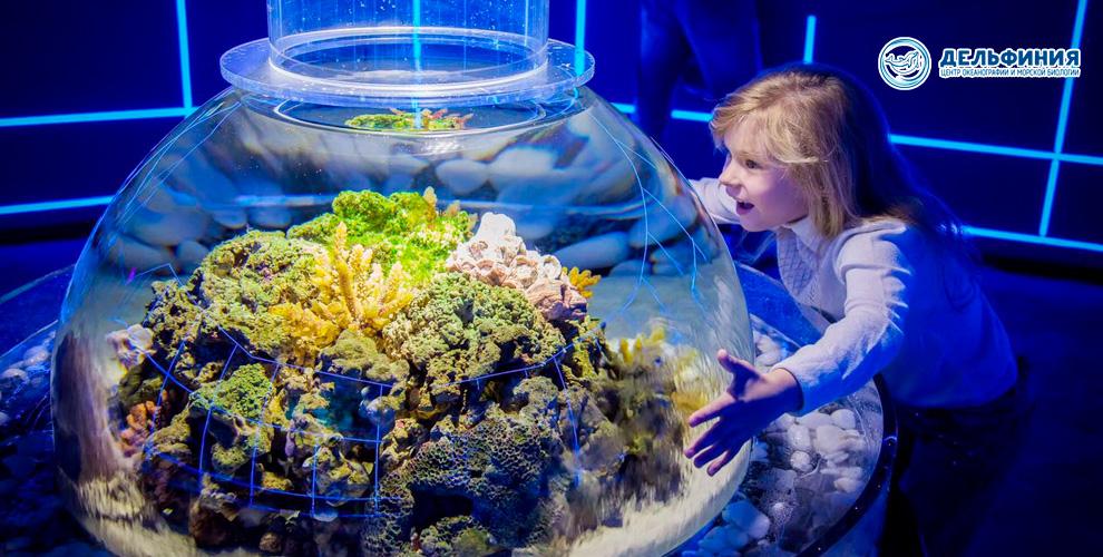 Центр океанографии и морской биологии «Дельфиния» приглашает на выставку и шоу