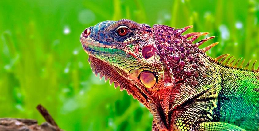 """Завораживающий мир тропиков! Билеты на выставку животных и насекомых для взрослых и детей в компании """"Счастливые тропики"""""""