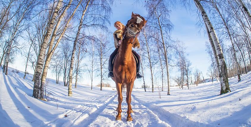 "Конная прогулка по живописному Шуваловскому парку от конно-спортивного клуба ""Арена"""