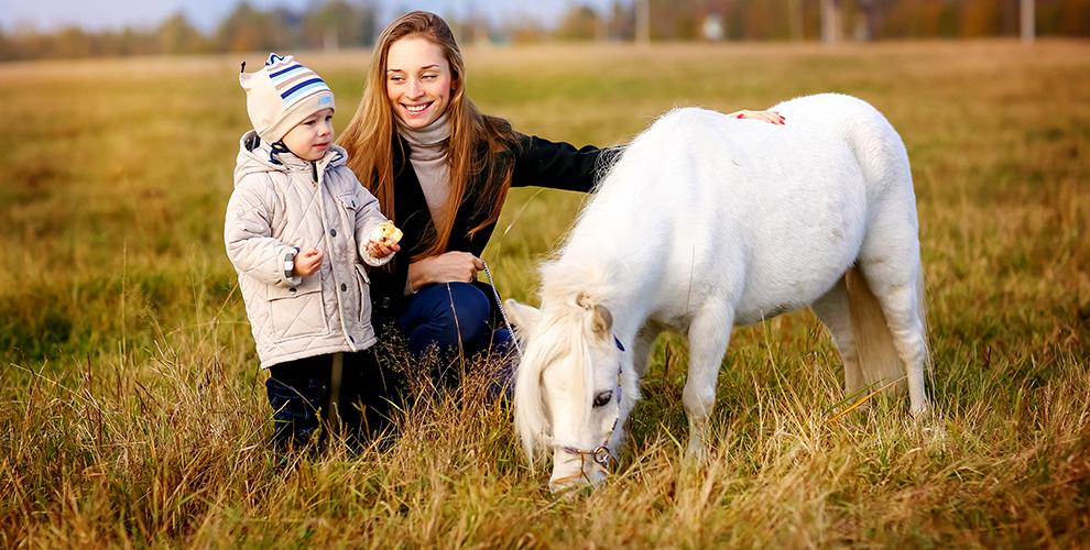 Катание на лошадях и пони, экскурсия, контактный зоопарк в конном клубе «Пинто-бриз»