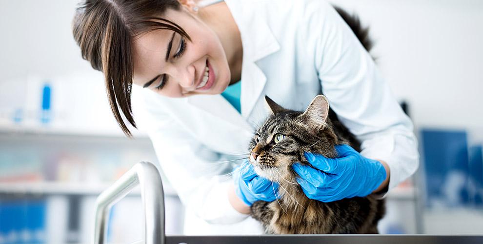 Ветеринарная клиника «Томас»: анализы дляживотных, кастрация, стрижка кошек исобак