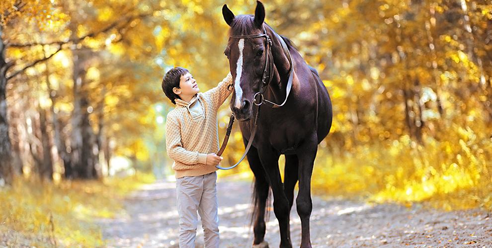 «Солнечный конь»: занятия поверховой езде, аренда лошади, конный кружок