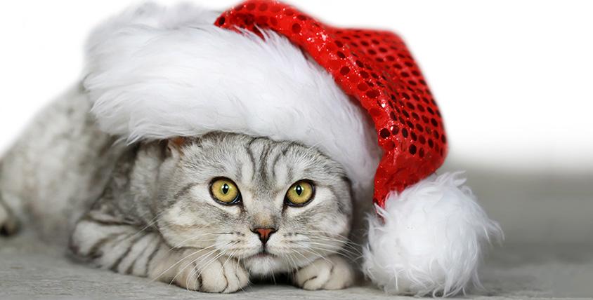 "Билеты за полцены на выставку кошек от клуба ""Амур-Нева"""